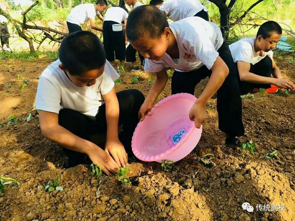 少林寺武校的小学员在训练武术